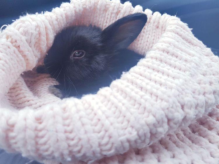 Rabbit Sleaping Relaxing Blak Gorro Conejo Conejo Negro Dormir Relajarse Frio ⛄❄ Amor ♥ Ternura EyeEmNewHere Pets Animal Beauty Cute No People One Animal Mammal Day Winter