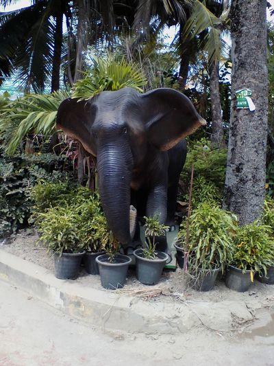 Elephant Animals In The Wild Animal Trunk Mammal