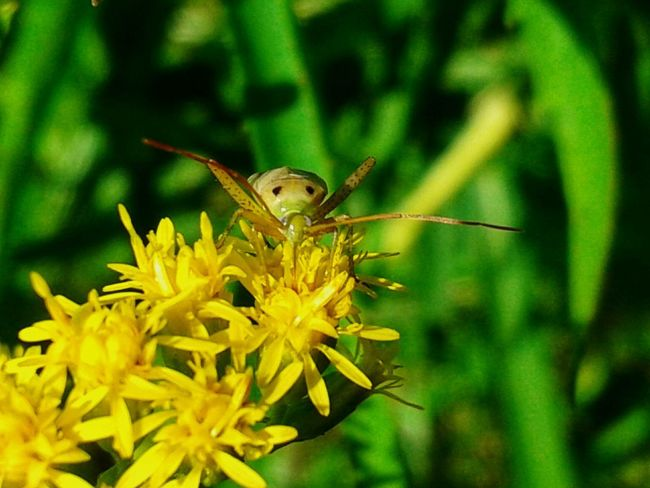Flowers Flowers, Nature And Beauty Insects  Nature Nature Photography Naturelovers Natura Insetto Yellow Flower Fiore Fiore🌼🌻🌺 Fiori Thank You My Friends 😊 Eyem Eyem Gallery EyEm Selects Eyem Nature Eyem Nature Lovers  Eyemphotography Eyem4photography Flower Butterfly - Insect Insect Close-up Animal Antenna