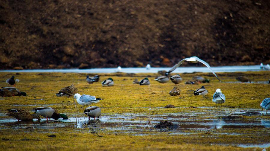 Flock of seagulls on beach