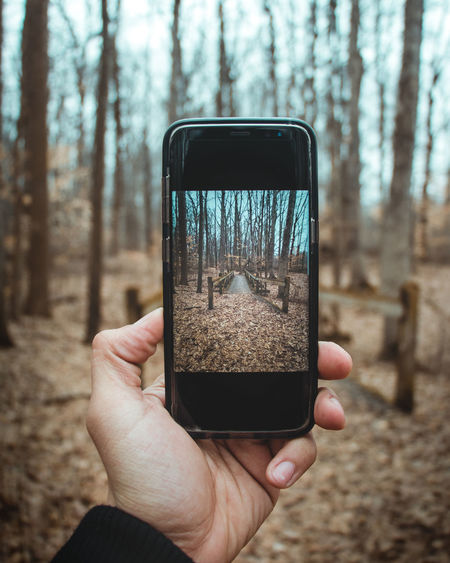 Close-up of hand holding mobile phone in forest