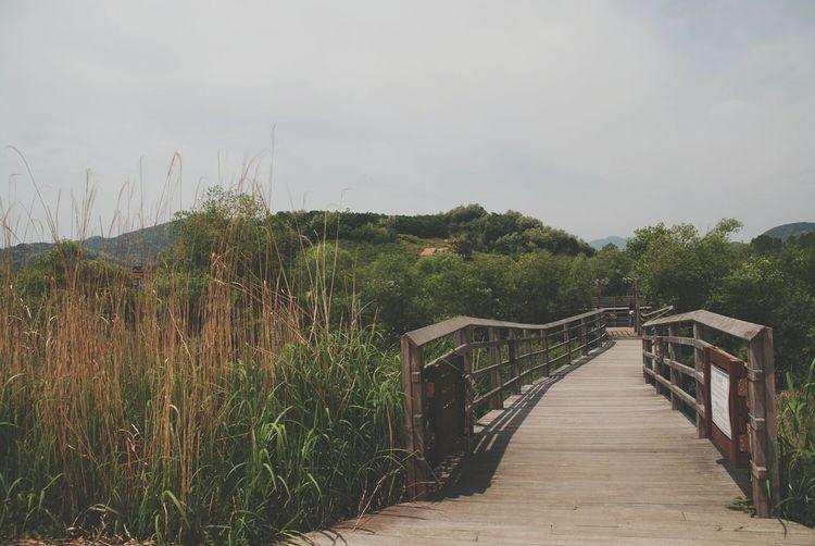 Footbridge between trees against sky