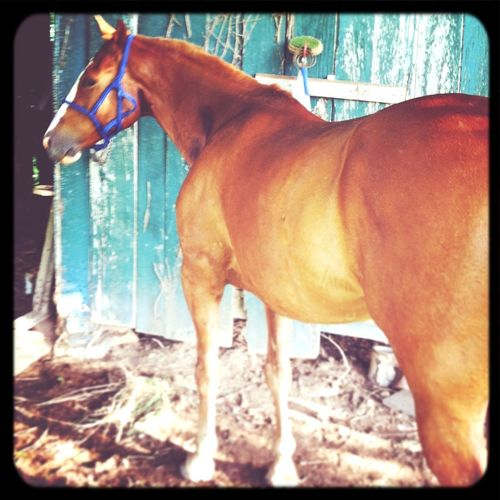 my Lucky.. Horse Animal Love Beautiful Old Barns