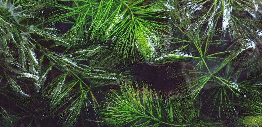Close-up of algae.