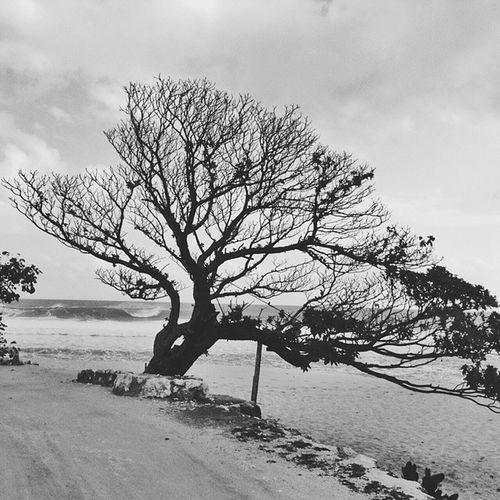 Tree on the beach. Vscocam || Yogjakarta || Beach || Blackandwhite || bnw || tree || panorama || scenary
