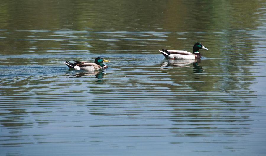 Bird Animal Themes Vertebrate Animals In The Wild Animal Wildlife Animal Group Of Animals