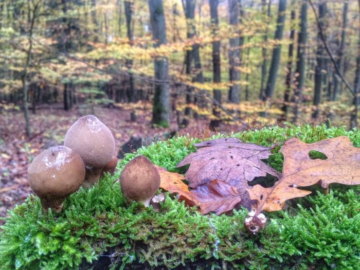 Autumn Colors In The Forest at Saarland Saarbruecken