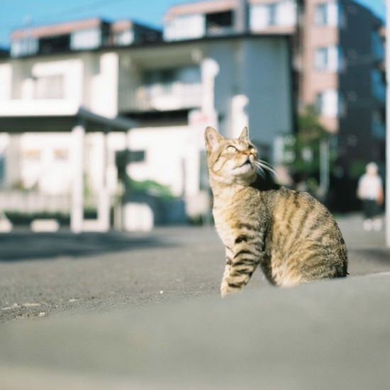 Filmphotography Photography Film Photo Japan 120 Film Cat