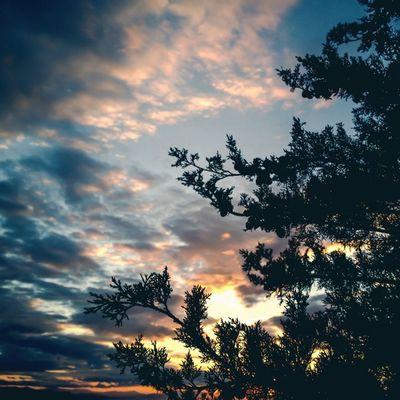 Nature colors % tones. Tones Igmasters In_athens Sky skyporn sunset tree justgoshoot Lumia lumia1020 vsco vscocam vscophile nature Nokia