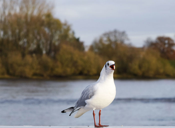 Close-up of bird perching on shore in autumn