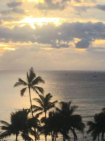Palm Trees 🌴 Waikiki Sunset Tropics Pacific Sunset Pacific Ocean View Oahu Sunset Island Of Oahu, Hawaii Waikiki Beach Waikiki No Edit/no Filter No People Sky - Clouds Pacific Sunset An Eye For Travel