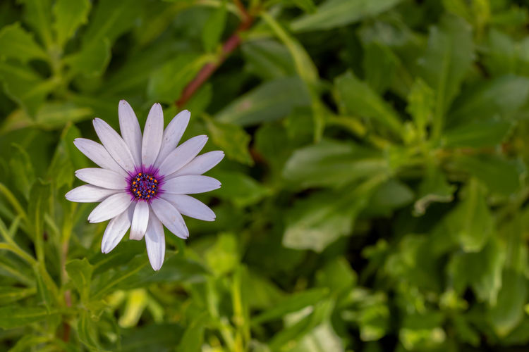 Flower Flowering Plant Fragility Plant Vulnerability  Freshness Petal Growth Beauty In Nature Flower Head Inflorescence Close-up Green Color Nature Day No People Leaf Botany Plant Part Pollen Purple
