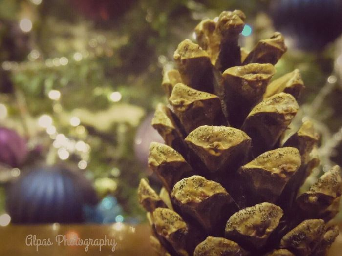 Pinecones and lights First Eyeem Photo