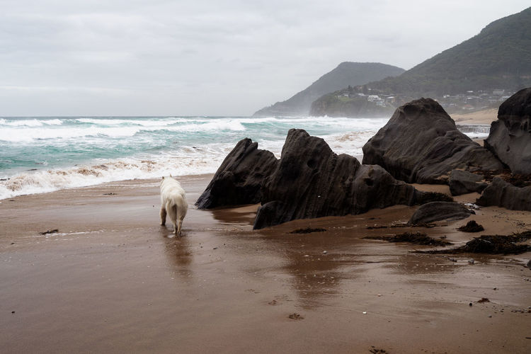 View of dog at beach against sky