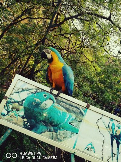 Blue Color Animals In The Wild Bird Nature Animal Wildlife Animal Themes Beauty In Nature Domestic Animals Protection Animals In Captivity Photograph Zoo Animals  Zoophotography