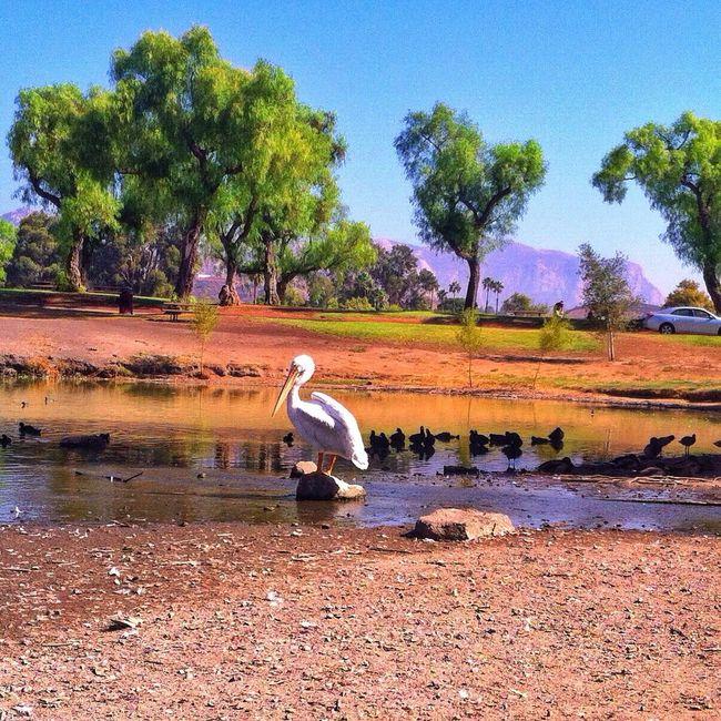 EyeEm Nature Lover Birds Bird Photography Lake