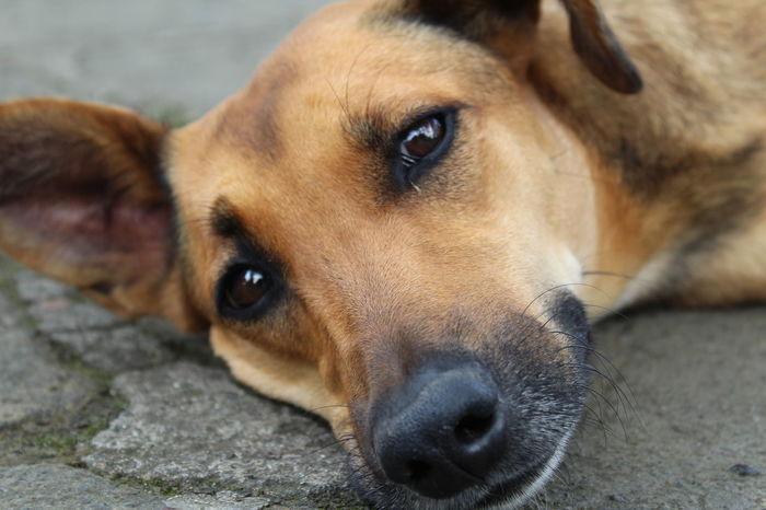 EyeEm Selects Miradas Que Enamoran Perros❤ Perrito Perro Perros  Perros Callejeros Perritos Criollo