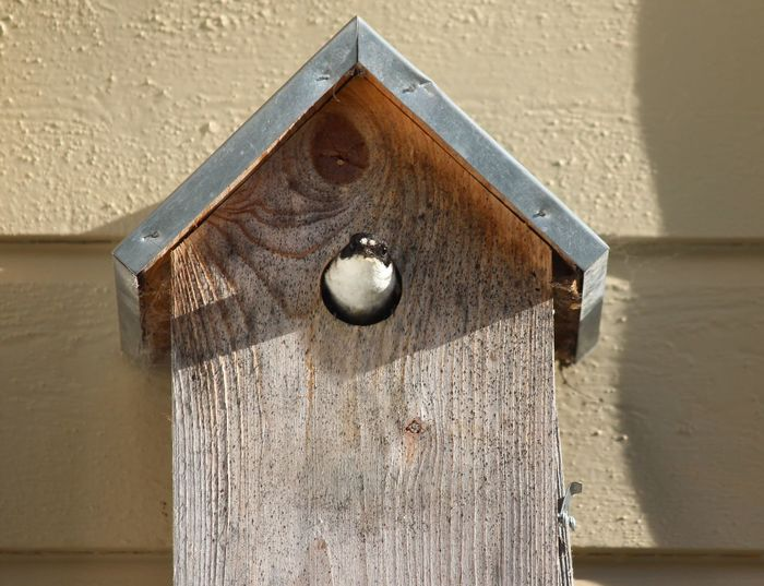 Wood - Material Wall - Building Feature Sunlight No People Day Birdhouse Architecture Close-up Shadow Built Structure Metal Door Entrance Outdoors Hanging Old Nature Animal Hole
