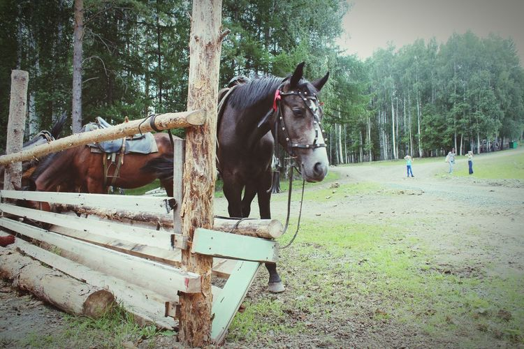 Gectorfontroy Ural Bashkortostan Forest Beautiful Russia Naturelovers Uchaly Russian Nature