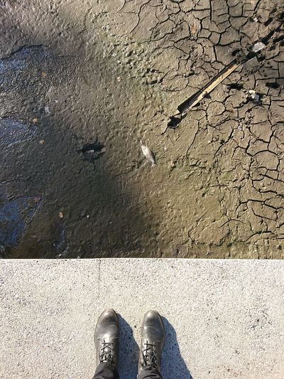 Empty woog...did you spot the dead fish? (bathing sea) Low Section Human Leg Standing Personal Perspective One Person Shoe Leisure Activity Real People Human Body Part Outdoors Day Close-up Adults Only One Man Only People Adult Mobilephotography Xperiaphotography Xperiaxz