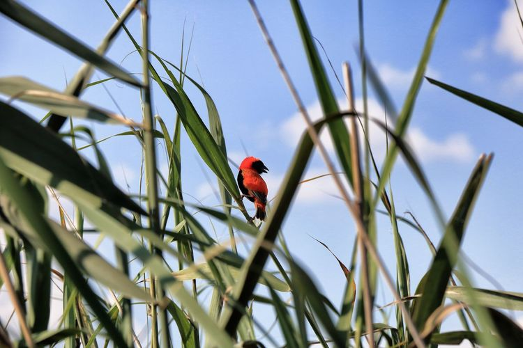 Low angle view of bird perching on red against sky