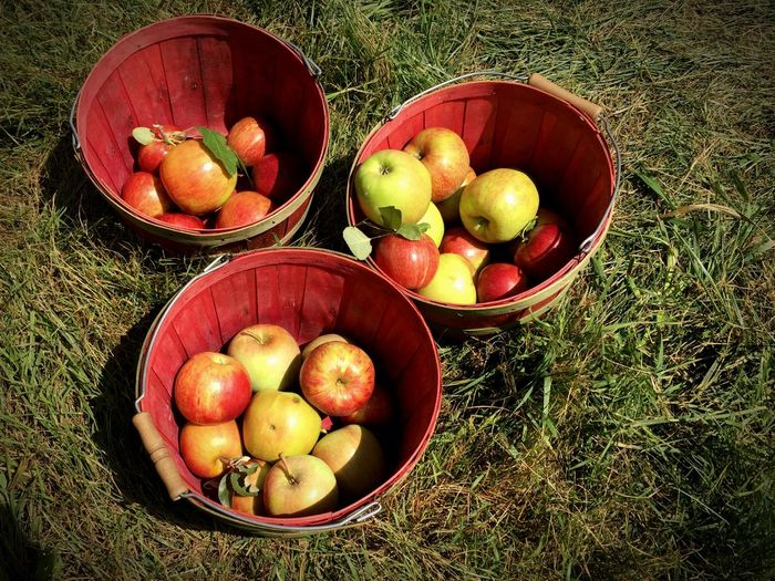 Apple Picking Apples Fresh Produce North Carolina Fall Colors Family EyeEm Best Shots Check This Out Escaping Red