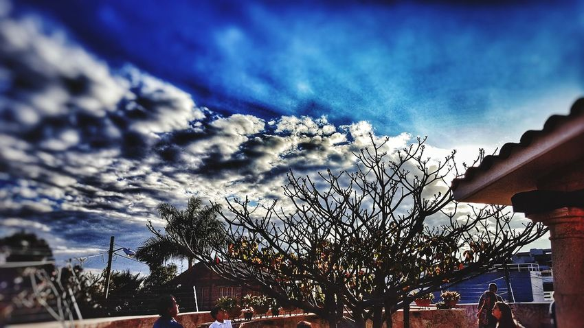 Nature Sky Low Angle View Cloud - Sky Outdoors Tree Beauty In Nature No People Day Scenics Close-up