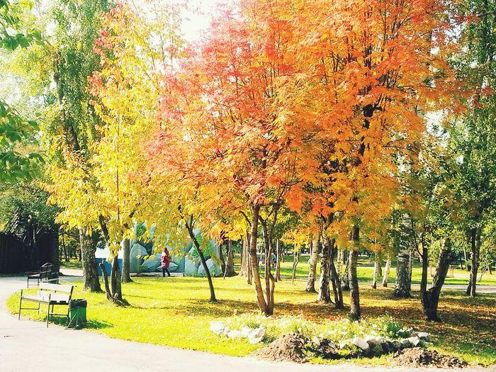 Tree Season