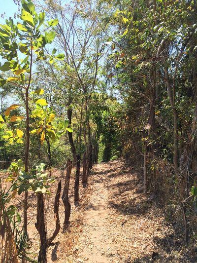 Lagolândia Nature Trees Green Ecology Ecoturism