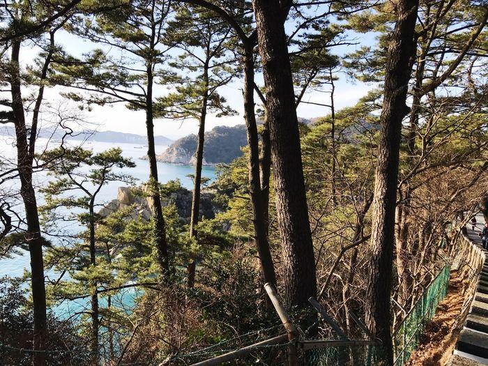 busan, tae-jong-dae Busan,Korea Taejongdae Sea And Sky Seasky Pine Tree Beautiful Nature Mountains And Sky
