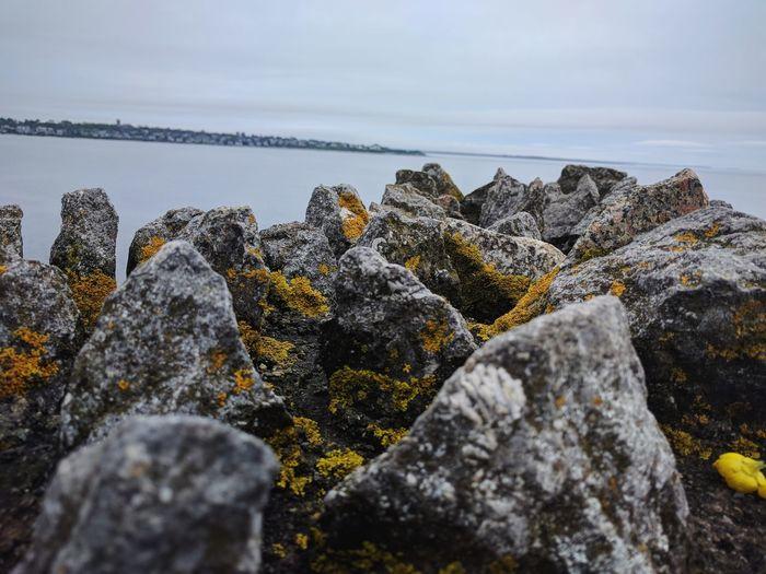 Mossy rocks in newport, rhode island