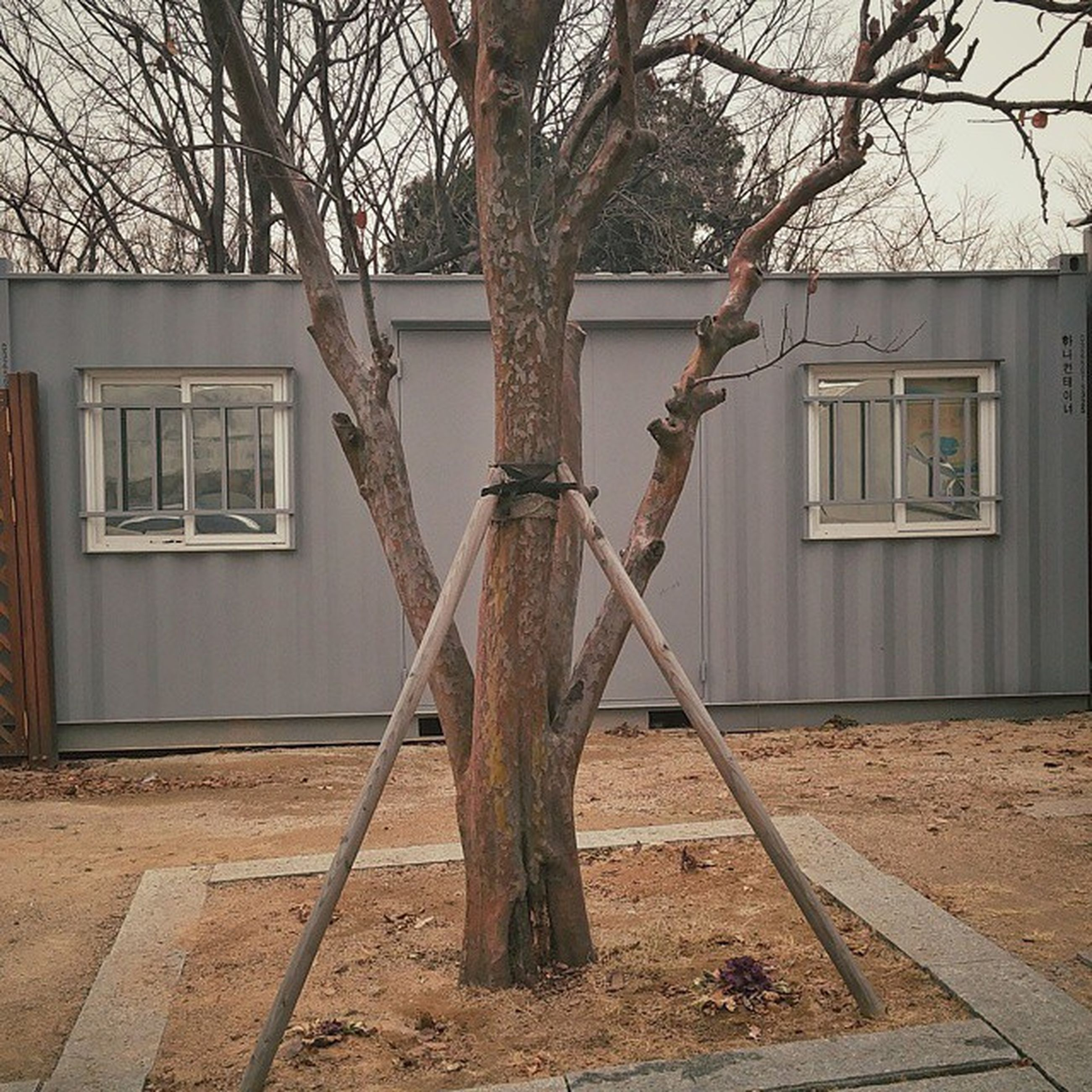 building exterior, architecture, built structure, tree, bare tree, branch, house, window, tree trunk, residential structure, day, residential building, shadow, outdoors, no people, sunlight, city, building, absence, door