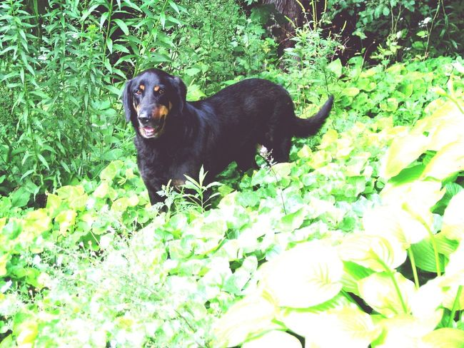 i will miss you so much, best dog on the entire world