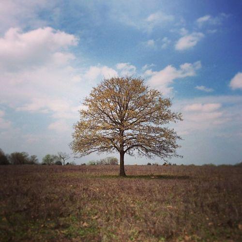 Lone Tree 12