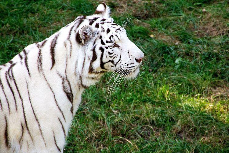 Serengeti-Park, Hodenhagen LVC Black And White Check This Out