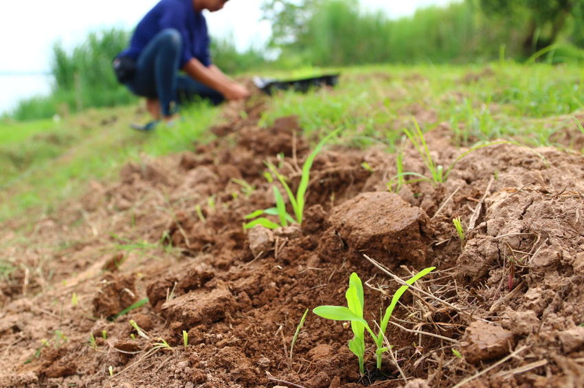 Adult Agriculture Close-up Day Farm Farmer Field Growth Lifestyles Nature Occupation One Person Organic Farm Outdoors People Plant Real People Rural Scene Sapling Working