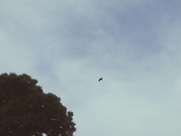 Flying Bird Beauty In Nature Sky Outdoors Tree Lonleysoul Nature