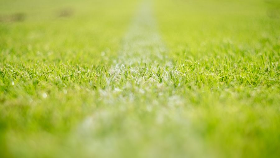 Surface level of grass on field