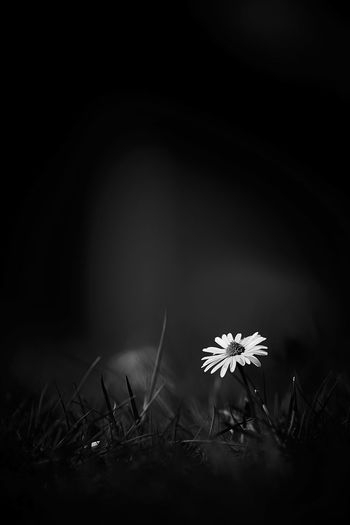 https://youtu.be/bCuhuePlP8o I´m going under and this time I fear there's no one to save me This all or nothing really got a way of driving me crazy.... Black And White Flowering Plant Plant Flower Freshness Fragility Vulnerability  Nature No People Growth Land Beauty In Nature Close-up Field Night Grass Dark Inflorescence Outdoors Petal Copy Space Flower Head My First Eyem Photo Eyemphotography Eyem Best Shots - Flowers Eyem Gallery EyEmNewHere Copy Space Beauty In Nature Freshness
