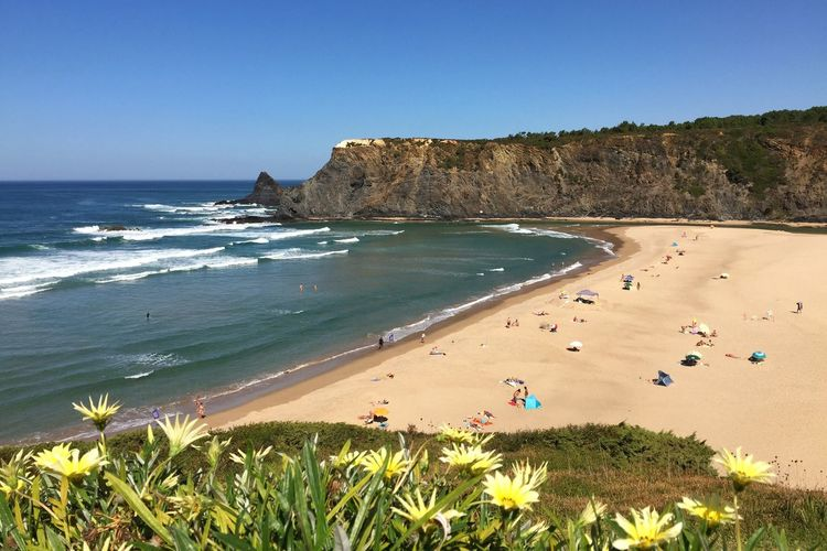 Water Beach Sea Flower Tranquil Scene Vacations Blue Scenics Beauty In Nature Plant Tranquility Shore Clear Sky High Angle View Tourist Sand Nature Tourism Coastline Travel Destinations Costa Vicentina Coastline Beachphotography Beauty In Nature