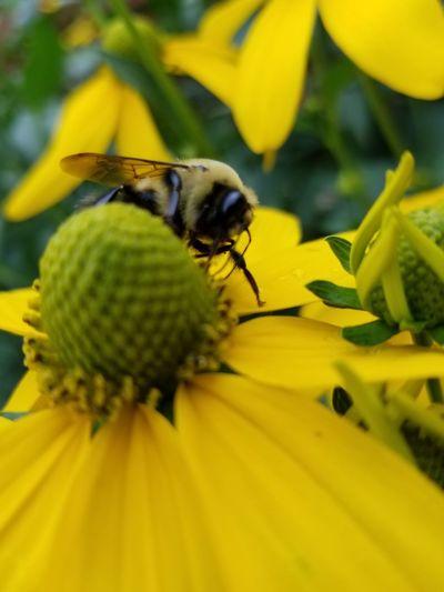 just buzzing