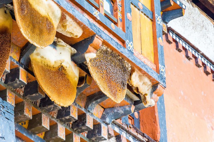 Low Angle View Of Mushrooms Growing On House Wall