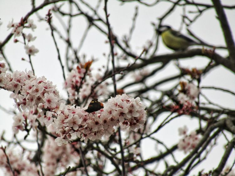 Growth Nature Freshness Beauty In Nature Flower Tree Branch No People Close-up Low Angle View Fragility Outdoors Day Bird Butterfly