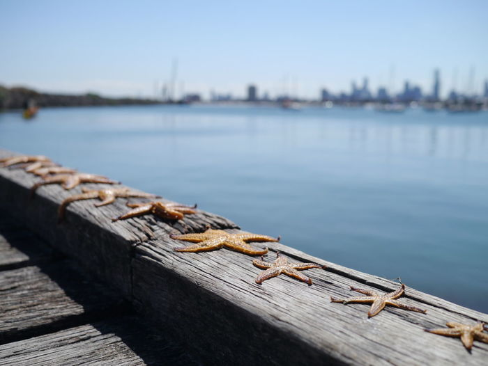 Dead starfish on pier by sea against sky