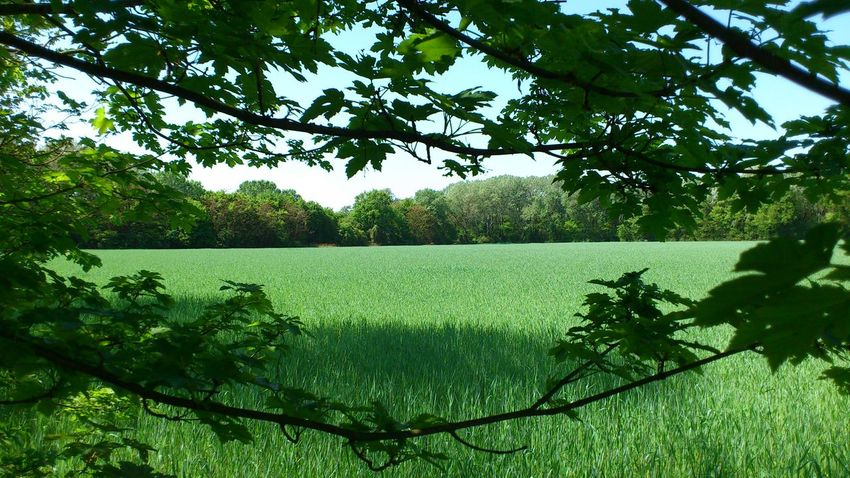 Lobau Austria Löbau Austrianphotographers Beauty In Nature Day Field Grass Green Color Growth Landscape Leaf Nature No People Outdoors Plant Scenics Sky Tranquility Tree Ymoart Connected By Travel Lost In The Landscape