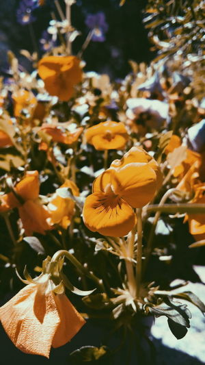 Taking Photos Spring Flowers Naturephotography Popular Eye4photography  AMPt_community Flowers Yellow Flower Narure_collection Nature_collection Landscape_collection EyeEmNatureLover Nature Photography Naturelovers Garden Love