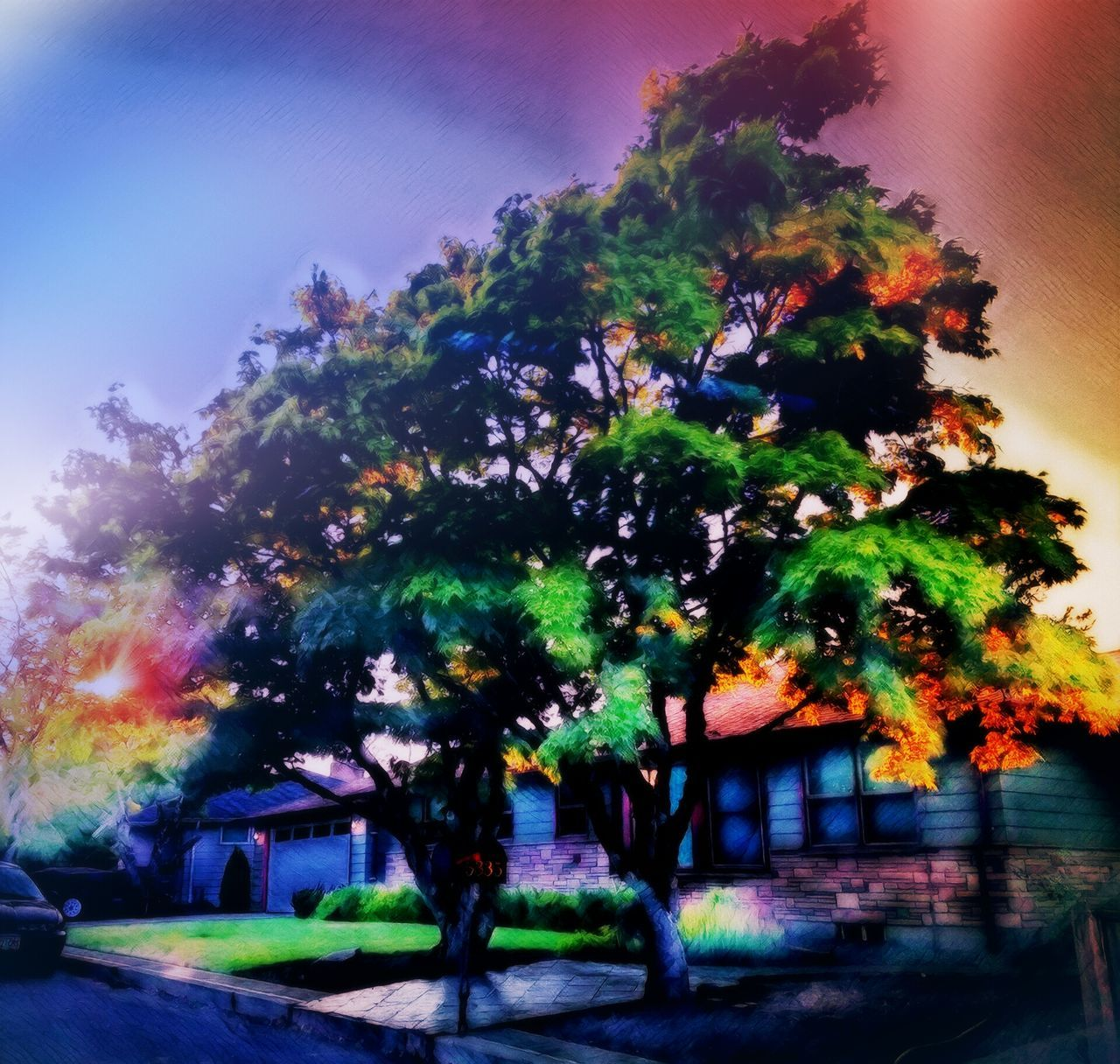 tree, no people, growth, nature, beauty in nature, outdoors, day, illuminated, sky