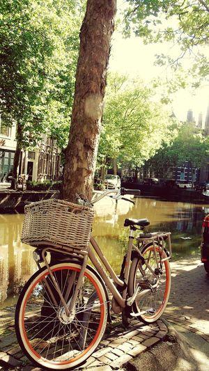 Bike Landscapes