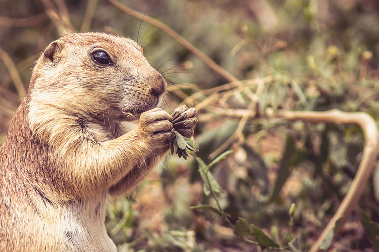 Animal Animal Head  Animal Themes Animal Wildlife Animals In The Wild Close-up Day Eating Field Focus On Foreground Herbivorous Land Mammal Nature No People One Animal Outdoors Plant Profile View Rodent Side View Tree Vertebrate Whisker