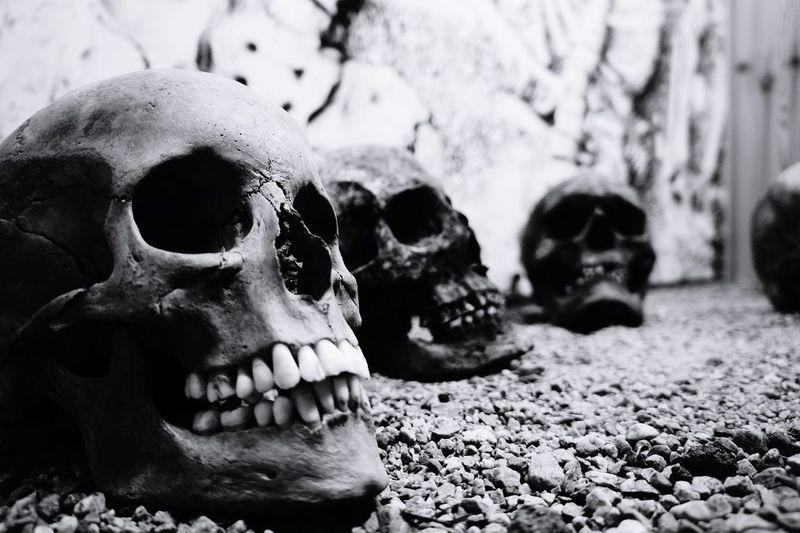 Traveling Travel Skull Bones Viking Museum Norway Blackandwhite Black And White Black & White